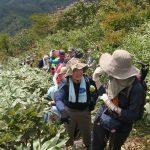 【ガイド活動】中蒜山登山のガイドをしました