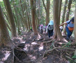 中蒜山登山 5合目手前の急登