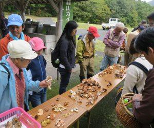 10/14 キノコを楽しむ会  食、毒をベテランが鑑定、おいしい食べ方も説明