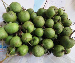 10/5 サルナシの実 キュウイの原種、味もそっくり同じ、キュウイは中国サルナシを改良したものだそうです。