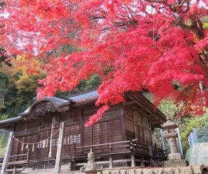 11/9 徳山神社のモミジ