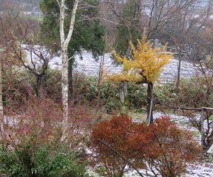 11/21 蒜山盆地に積雪