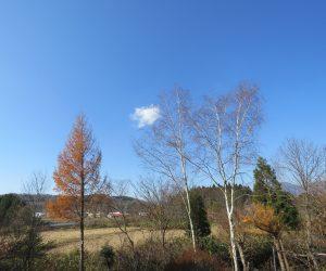 11/28 白樺、落葉松と浮浪雲