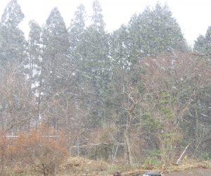 12/5 吹き降り 雪が水平に飛んで行きます