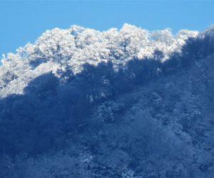 12/7 上蒜山三角点付近の樹氷  茅部野より 三角点付近にだけ日が当たり手前の登山道と好対照