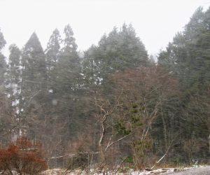 12/11 吹雪 雪が水平に飛んで行きます