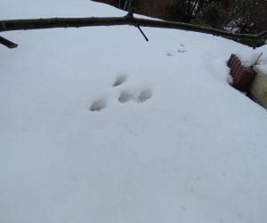 12/19 ウサギの足跡