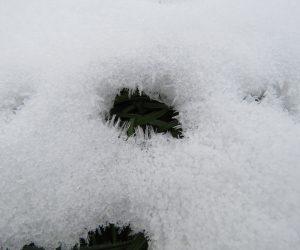 12/22 雪の霜