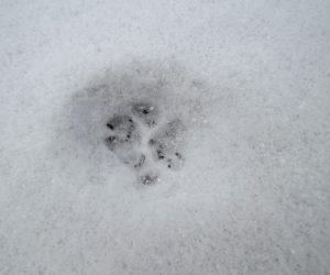 12/28 ネコの足跡をアップ