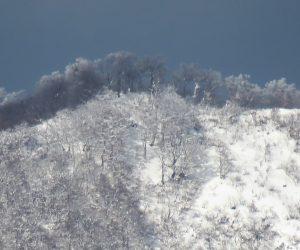 12/30 上蒜山山頂付近のブナ林 以前と比べるとずいぶん木の数が減ったように感じます。