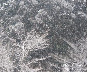 1/22 雪景色 蒜山には珍しくまっすぐ降る雪