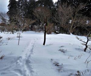 1/24  雪景色