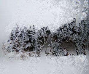 1/30 窓ガラスの霜 気温と水分量によっていろいろな模様が出来ます