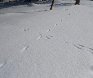 2/8 ウサギと狐の足跡