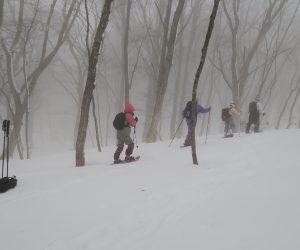 3/11 烏ヶ山南麓スノーシュウハイキング 霧のミズナラ林を行く ナラ枯れの木は見当たりません