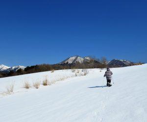 2/23 酪大牧草地付近をスノーシュウで歩く