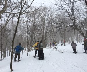 IMG_2650巨木探検①