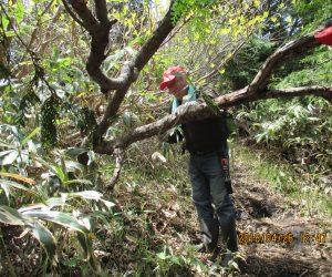 蒜山登山道整備 倒木