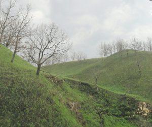 5/2 鳩が原  4月1日に山焼きをした後ススキなどが芽生えてきました。 焼け残った立木は火に強い柏の木です。