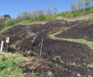 5/3 鳩ヶ原湿地サクラソウ自生地   サクラソウ自生地の周囲がきれいに焼き払ってあります。