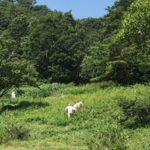 【保全活動】下蒜山登山口の犬挟湿原草刈りを行いました