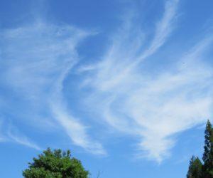 6/24 巻雲