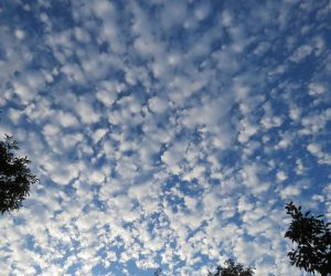 9/5 鰯雲より大きいのでサバ雲?もっと大きければ羊雲  巻積雲です
