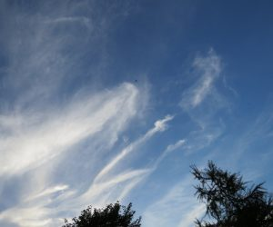 8/22 巻雲