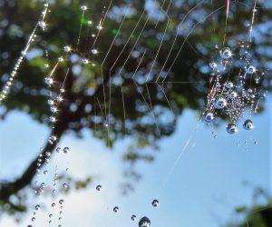 10/3 蜘蛛のネックレス