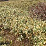【ツアーレポート】秋の蒜山三座縦走登山を開催しました