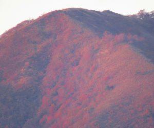 10/28  夕日を浴びる上蒜山8合目付近