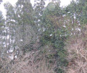 12/8 茅部野に降る雪