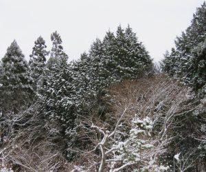 12/9 本格的な雪化粧