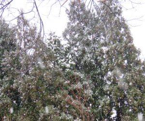 12/14 蒜山盆地にようやく雪