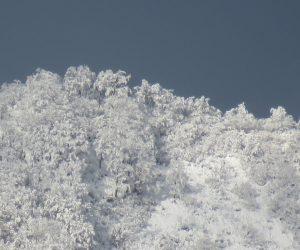 12/15 上蒜山山頂のブナ林