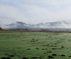 25日 牧草地の黒いマウントはモグラの仕業
