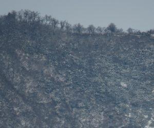 25日 上蒜山山頂付近のブナ林  以前と比べずいぶんまばらになったように感じます