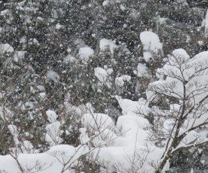 29日 降りしきる雪