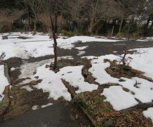 1/11  残雪 茅部野はこんな感じで12月末に30㎝位積もった雪が日毎に減っていきます。