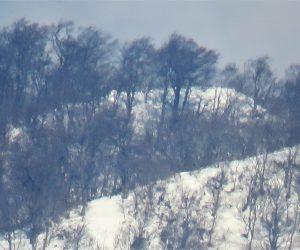 1/23 上蒜山三角点付近のブナ林、ささやぶが雪の下になったようです