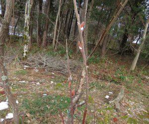 2/4     昨日の雨で盆地の雪が消える