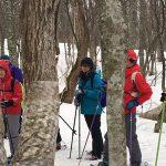 【ツアーレポート】スノーシュー巨木探検を開催しました