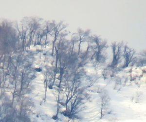 2/23  上蒜山山頂のブナ林