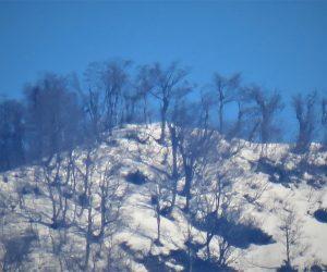 上蒜山山頂のブナ林
