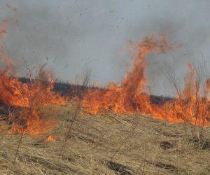 4/7 ススキが一番よく燃える炎は3以上にも燃え上がる、パチ、パチと激しい音を立てるが風さえ弱ければ日脚は遅い、芝のように細い葉は炎は小さいが火脚が速いので火にまかれる危険が高い。