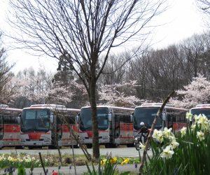4/17  観光バスと桜 この季節は学校の新入生のオリエンテーションの季節、例年休暇村などに1~2泊しゲームやハイキングなどを行っています。