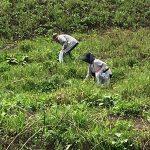 【ツアーレポート】ワラビ採りを開催しました
