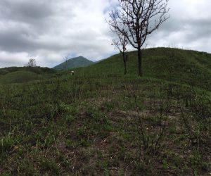 ワラビ1 広いわらび山で採り放題
