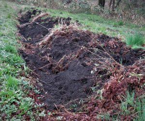 4/25 猪の被害  耕作放棄して5年、人家から2~30mのところでこんな状態