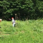 【保全活動】湿原保全のため草刈りなど行いました